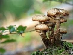 Les champignons faciles à reconnaître en forêt